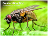 Flie Templates For Powerpoint