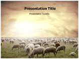 Sheeps Templates For Powerpoint