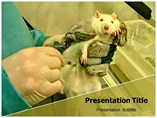 animal experimentation Templates For Powerpoint