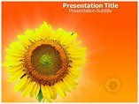 Sun Flower powerpoint template
