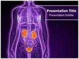 Specialists In Urology