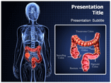 Inflammatory Bowel Templates For Powerpoint