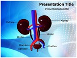 Urology Health Specialist Templates For Powerpoint