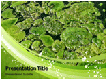 Green Algae powerpoint template