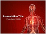 Vascular System Templates For Powerpoint