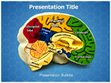 Brain Anatomy Templates For Powerpoint