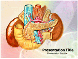 Abdominal Anatomy Templates For Powerpoint
