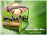 Ant PPT template