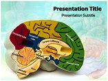 Brain Details Templates For Powerpoint