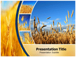 Wheat Templates For Powerpoint