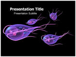 Gestured Templates For Powerpoint