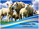 Sheep Templates For Powerpoint