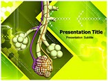 Alveoli Templates For Powerpoint