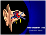 Ear Anatomy Model Templates For Powerpoint