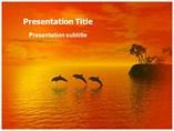 Dolphin Beach Templates For Powerpoint