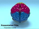Brain Structure PowerPoint Slide