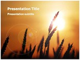 Wheat Field Templates For Powerpoint