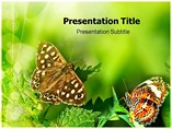 Butterfly Templates For Powerpoint