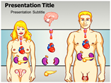 Endocrine System Templates For Powerpoint