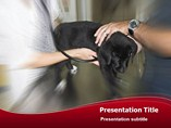 Veterinary surgeon Templates For Powerpoint