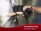Veterinary Surgeon - PPT Templates