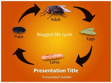 Maggot Life Cycle Powerpoint Template